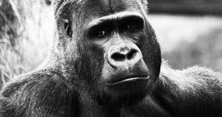 Overgaden PROJEKT: PERFORMANCE // Acción Gorila